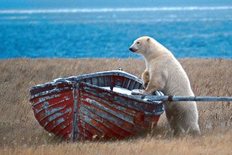 File:BearBoat.jpg