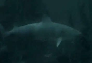 File:Shark portal.png