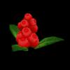 Burberry plant