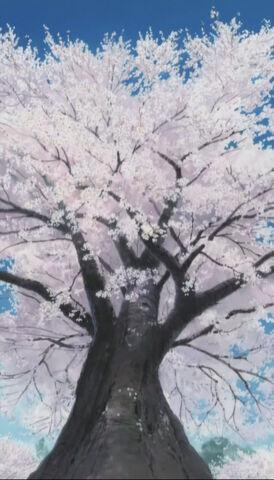 File:SakuraTree.jpg