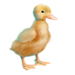 Item duckling 01