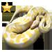 Item albinopython gold 01