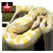 Item albinopython ruby 01