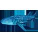 Item whaleshark 01