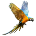 Item macaw 01