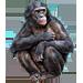 Item bonobo 01