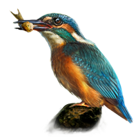 Huge item kingfisher 01