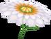 MK7 Flower Glider