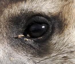 Wet Meerkat Claws | A close up of Tamu the meerkat's claws, … | Flickr