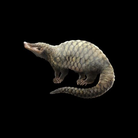 File:Tree Pangolin.jpg