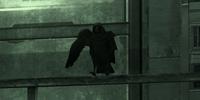 Raven (bird)