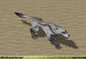 File:Alpha Grey Wolf 4.jpg