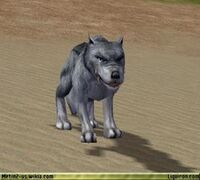 Alpha Blue Wolf 3