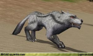 File:Hungry Grey Wolf 2.jpg