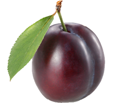 Image result for plum