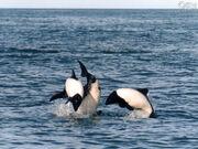 Valdez toninas.jpg
