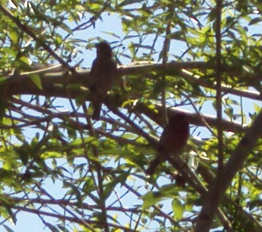 File:Local birds.jpg
