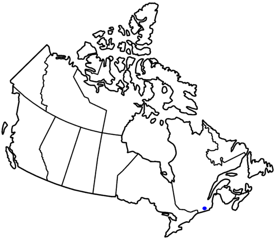 File:MontoshinCanada.png