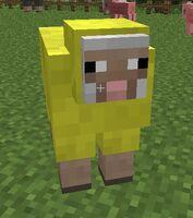 Yellow sheep