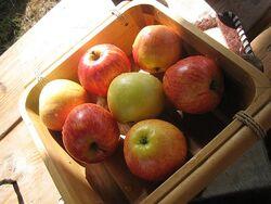 Äpfel Castra Aequitatis 2012-07-14 1302.JPG