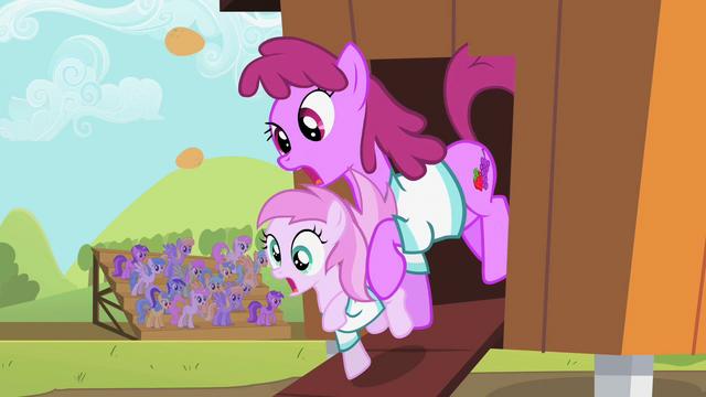 File:Berryshine and Piña Colada derp S02E05.png