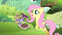 Fluttershy sees birds dropping acorns S4E14