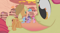 Camera zooms out to show Apple Teeny on Apple Bloom's back S1E09