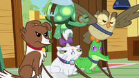 The other pets unhappy S3E11