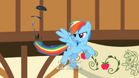 Rainbow Dash's poor tail S2E14