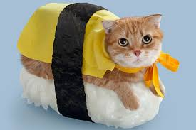 File:Catsushi.jpg