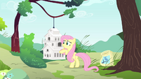 Fluttershy trying to help Mr. Robin S4E23