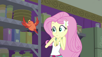 Constance appears before Fluttershy EG4