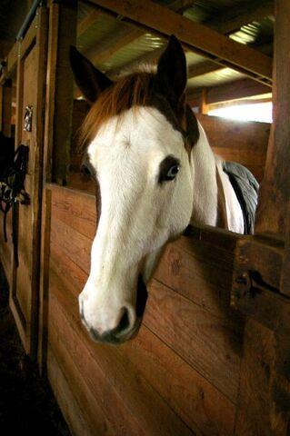 File:My favorite horse Skittles.jpg