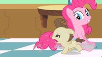 Pinkie Pie wait get Pound Cake S2E13