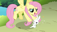 Fluttershy and dizzy Angel S03E10