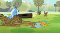 Trixie looking at the beavers S3E05
