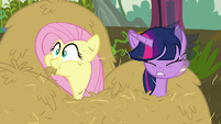 Twilight and Fluttershy pop out of hay S5E23