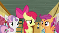 "Apple Bloom ""Didn't what?"" S6E4.png"