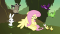 Animals trying to convince Fluttershy S2E22.png