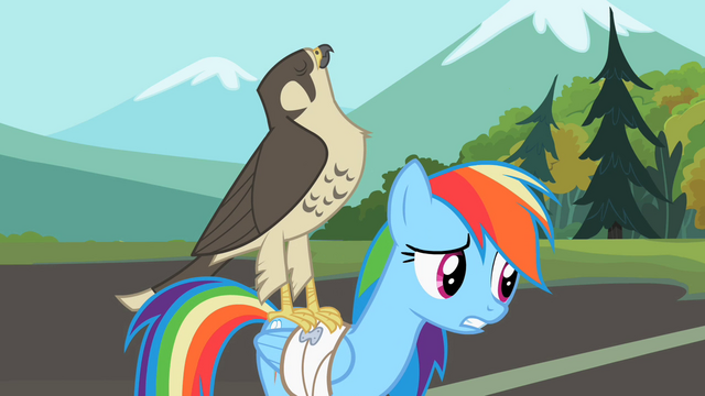 File:Rainbow Dash falcon on my back S2E7.png
