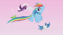 Rainbow Dash guiding the birds S1E11