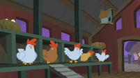Startled chickens S01E17