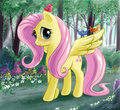 Fluttershy graceful