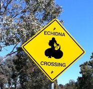 Echidna Crossing