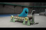 B.O.B. on a Treadmill