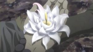 Sig salua flower