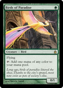 Birds of Paradise RAV