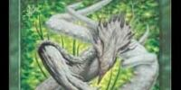 Root Sliver