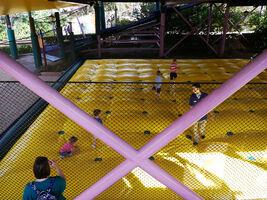 43 canopy crawl