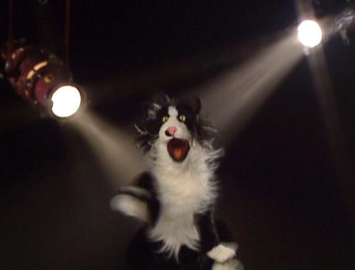 File:MovieMania-cathotroof.jpg